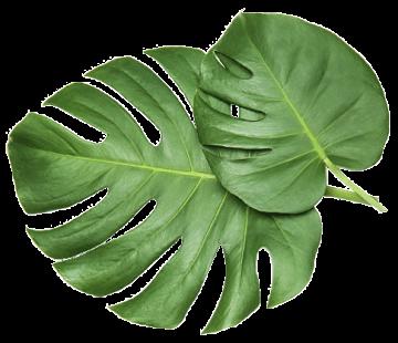 EISEN-GREEN-PRODUCTS-Blatt